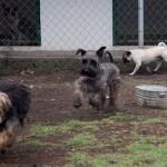 Perros en Happy Can Camp Puebla