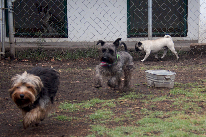 Perros en Happy Can Camp Puebla