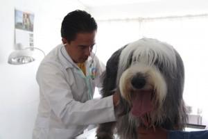 Veterinaria en Puebla HCC