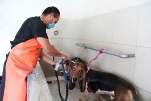 Estética canina HCC