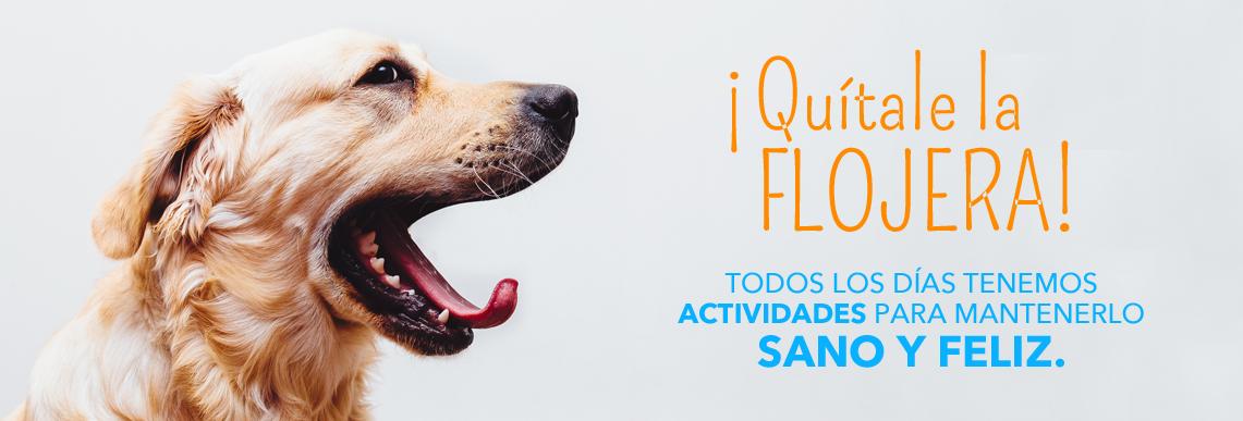 Cuidado y actividades para perros