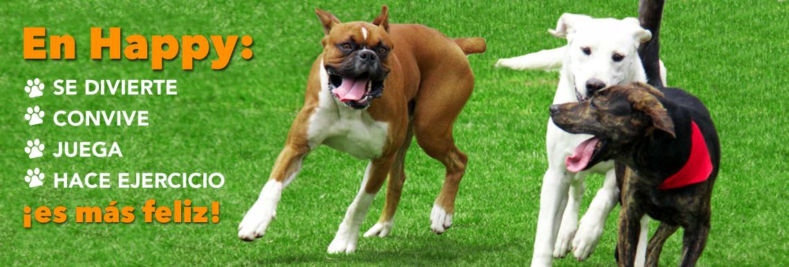 cuidado canino en puebla méxico