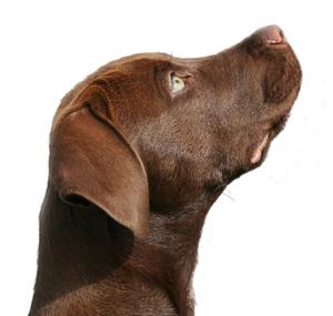 HCC respeto por tu perro